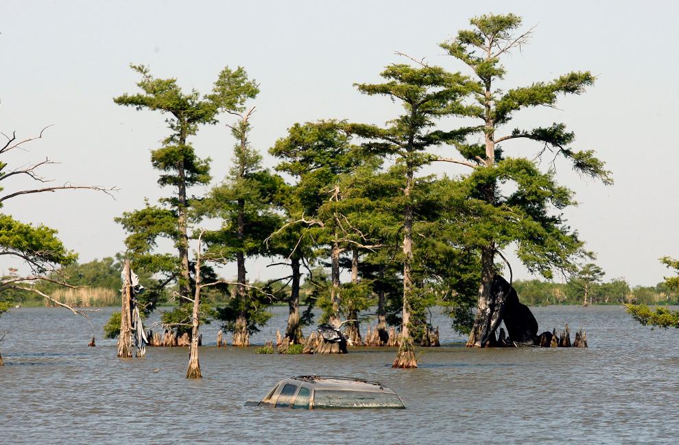 Поврежденная еще во время урагана Катрина машина все еще лежит на дне, недалеко от кипарисов в Венеции, штат Луизиана. Этот район все еще пытается восстановиться после урагана Катрина, прошедшем здесь в 2005 году. И вот теперь утечка нефти снова угрожает его экологии.