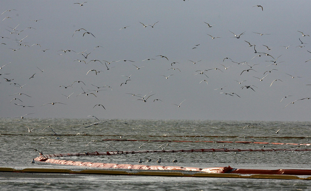 Птицы летают и сидят на банке, окруженной боновыми заграждениями на острове Бретон Саунд, где ранее произошла утечка нефти из-за взрыва на нефтяной вышке «Deepwater Horizon».